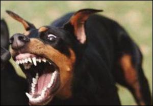 Белорусам могут запретить держать в квартирах «опасных» собак