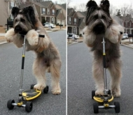 В США собака освоила самокат