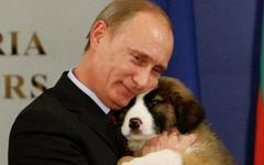 Российский премьер дал указание властям на местах заняться бродячими собаками