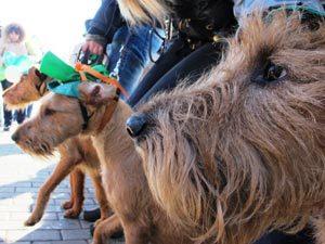 В Екатеринбурге прошел парад собак «в зеленом»
