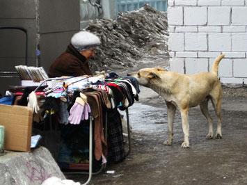 Госдума одобрила законопроект об обращении с животными