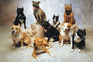 Госдума защитила домашних животных от хозяев