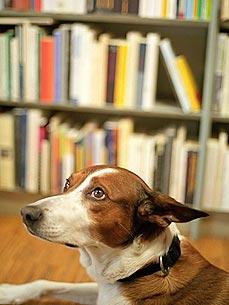 «Собачья терапия» в Йельском университете