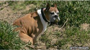 Вооруженный конфликт из-за собачьих экскрементов