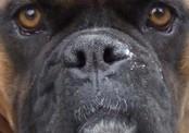 Собака спасла хозяев от вооруженных преступников