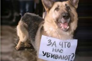 Президента Медведева просят остановить убийства собак