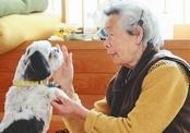 Собака спасла хозяйку от цунами