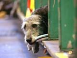В Японии спасли пса, три недели дрейфовавшего на крыше разрушенного дома