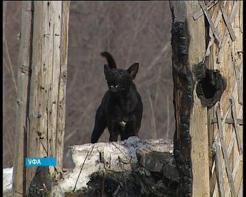 В Уфе началась прививочная кампания для домашних животных