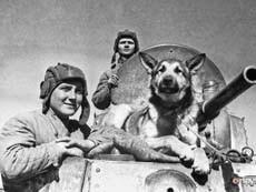 В Волгограде появится памятник собакам военного времени