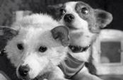 В космосе побывали 40 российских собак