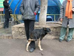 Донецкая семья дала приют харьковской собаке-инвалиду