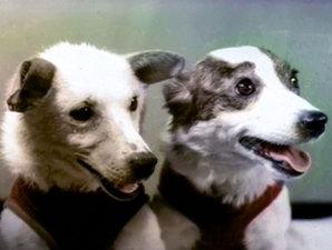 Красноярцы смогут получить автографы потомков космических псов