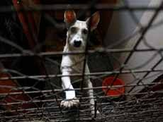 Защитники животных: в Петербурге выращивают собак на мясо