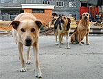 В Свердловской области суд обязал администрацию города построить приют для собак