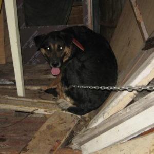 В запорожском дворе собака, на глазах у которой убили ее щенков, искусала несколько человек