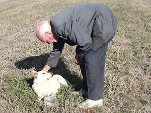 Спасенная самарской «Комсомолкой» собака наконец обрела хозяина
