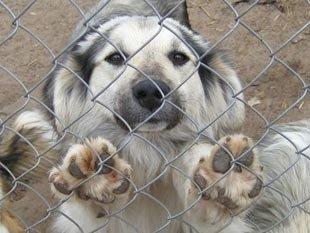 В Донецке будет построен приют для собак
