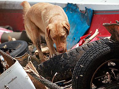 Новый дом для собак, пострадавших во время ураганов