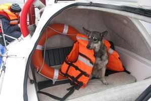 Собака провела два дня в воде, держась за осколок льда (Ижевск)