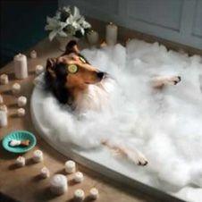 Шопинг и развлечения для домашних животных как доходный бизнес