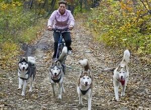 В Калининград собак запрягут… в велосипеды