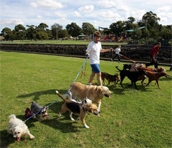 В Магадане началась установка специальных устройств для владельцев собак
