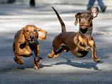 В крупных китайских городах принялись воспитывать собак и их хозяев