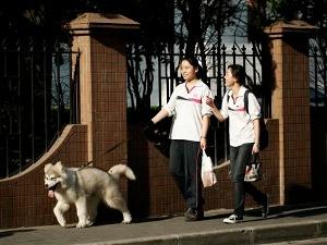 В Шанхае вступило в силу «правило одной собаки»
