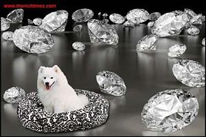 Бренд Lilly & Abbie представил серию корзинок для собак, декорированных Swarovski