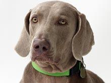 Слюна любимого пса спровоцировала странную реакцию у его владельца