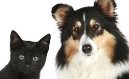 Житейская мудрость кошек и собак: четыре простых умения, которым нам стоит поучиться