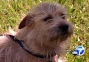 Собака, унесенная смерчем, приполза домой на сломанных лапах (США)