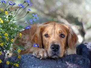 Рак остается главной причиной смерти собак