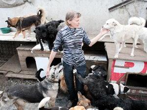 В Кемерове построят питомник для бездомных животных