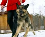 Гитлер хотел научить собак разговаривать
