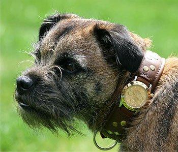 Эксклюзивные собачьи часы Rolex