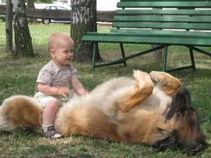Собаки-целители получили поддержку от мэрии Мурманска