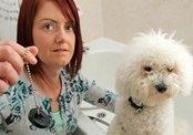 Пожарные спасли собаку, лапа которой застряла в сливном отверстии (Великобритания)