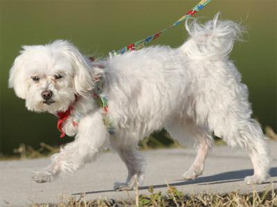 Умерла одна из самых богатых собак в мире