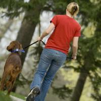 Прогулки с собакой приносят большую пользу, чем участие в спортивных играх