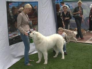 В Смоленске состоялась интернациональная выставка собак