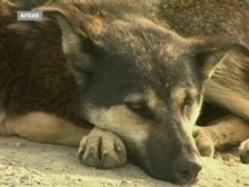 Собаку, жившую на трассе, приютили новые хозяева (Чита)