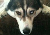 Собака предупредила хозяев об утечке газа в доме