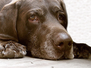 В Сан-Франциско предложили полностью запретить продажу домашних животных
