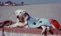 В Италии появился пляж для собак