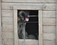 Казанцев просят спасти 200 собак