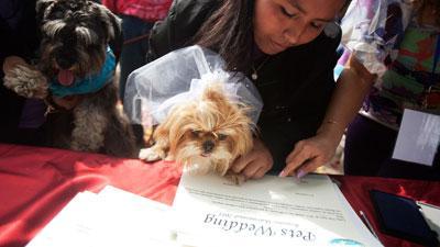 «День собачьих свадеб» в Перу