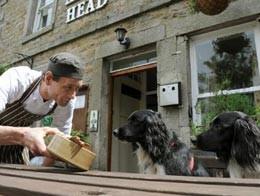 В Британии открылся паб для собак