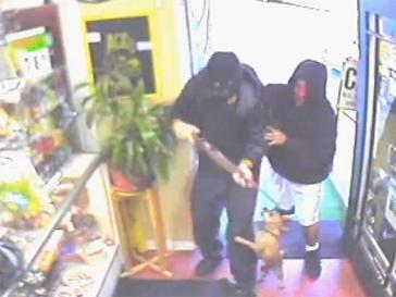 Миниатюрный пес выгнал грабителей и спас хозяина продуктового магазина в США